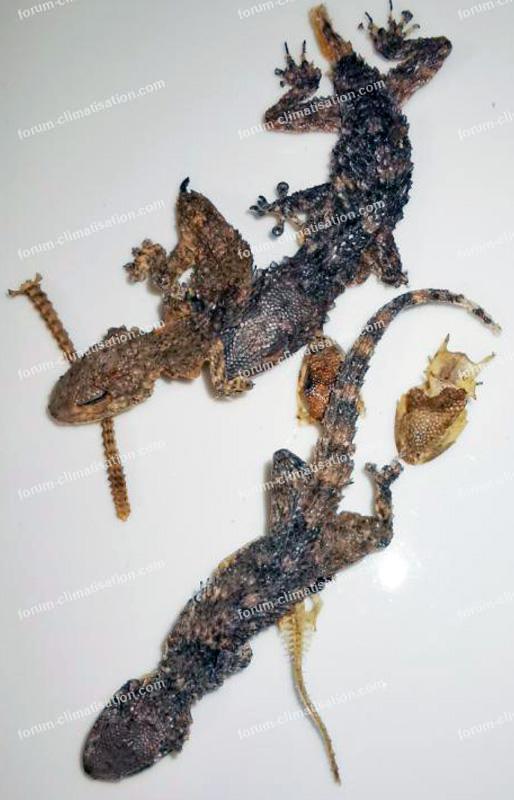 geckos carte climatisation