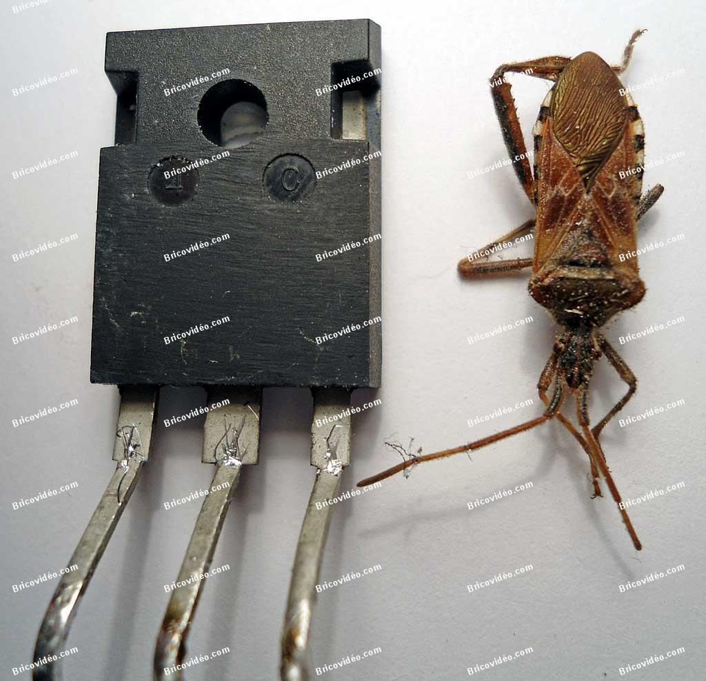 petite bete interieur appareil electronique